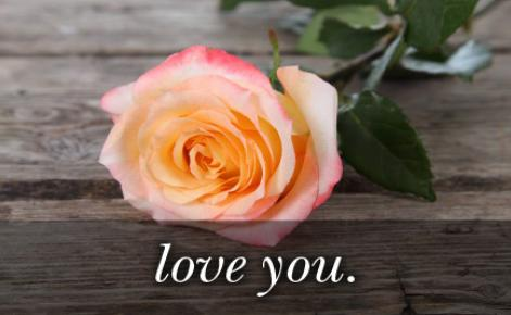Image of pink rose with the text
