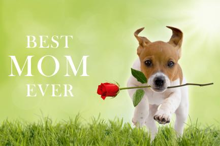 Image of a dog running with rose in mouth with the text