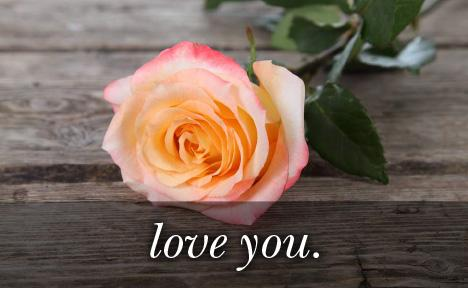 Image of peach rose with the text