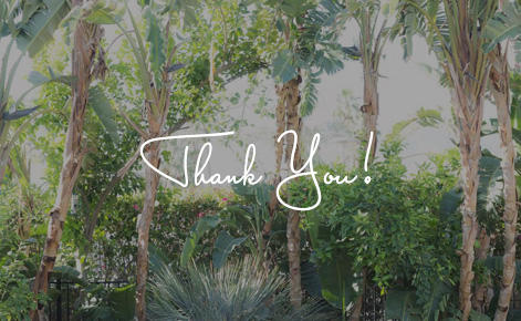 """Gift card image of palm trees with the text """"Thank You"""""""